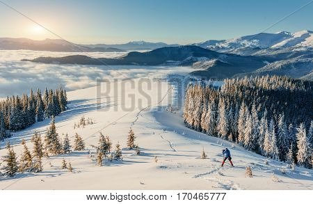 Skier going down the mountain on slope in a sunny day. Carpathians. Ukraine, Europe