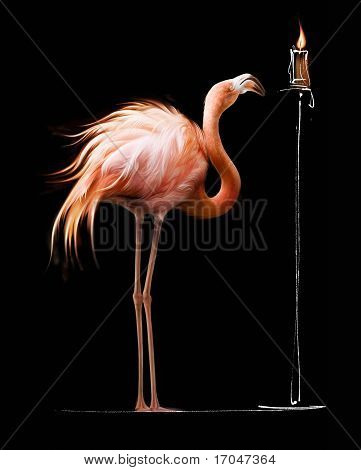Flamingo and a Candle