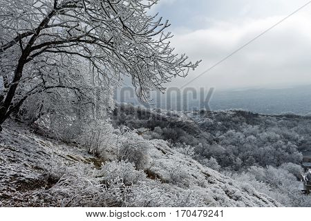 Winter landscape with snowy trees of Northern Caucasus