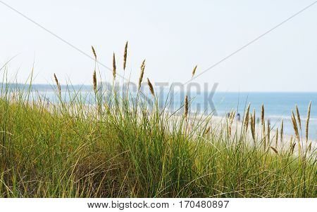 At the sea or ocean - green grass on dike with coast