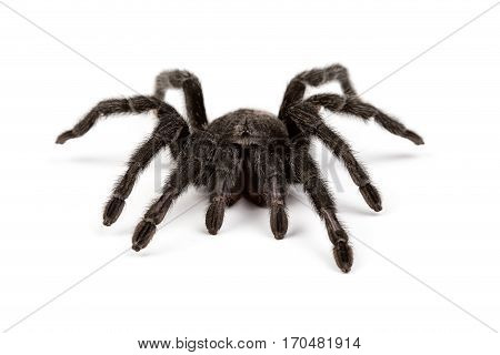 Isolated photo of spider's pelt on white background