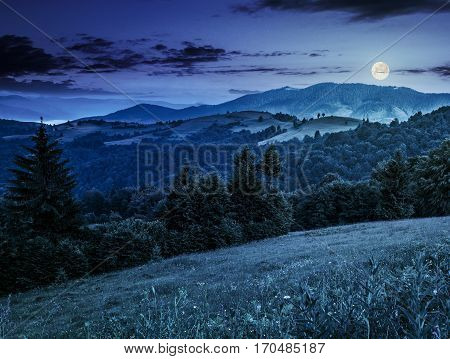 Spruce Forest On A Mountain Hill Side At Night
