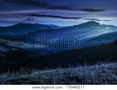 Wild Flowers In The Grass On Hillside At Night