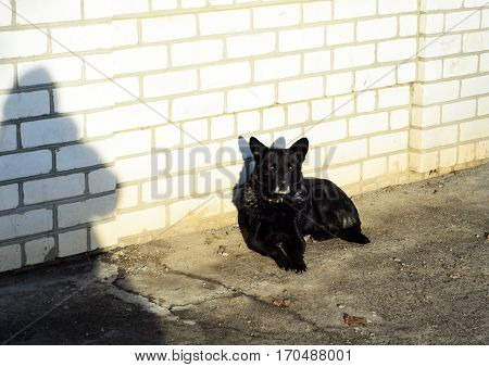 Homeless Black Dog