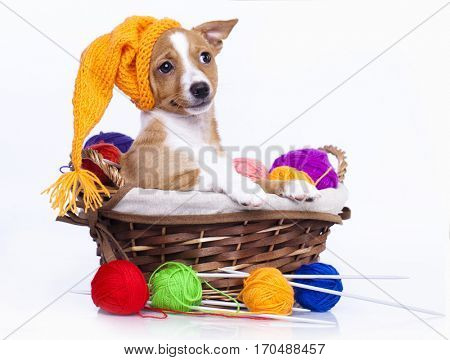 Puppy in a knitted cap and a ball of yarn