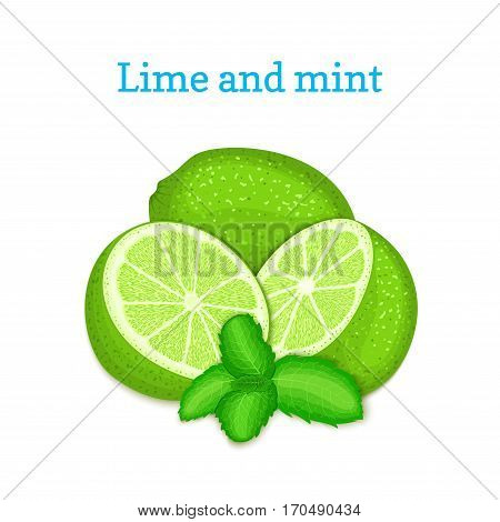 Vector composition of a citrus lime fruit and mint leaves. Green limes whole and cut. Group of tasty ripe tropical fruits for design for the packaging of juice, breakfast, healthy food, vegetarianism
