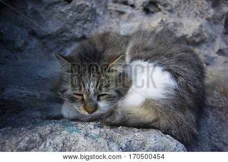 Street cat is sleeping Very cold. winter has come