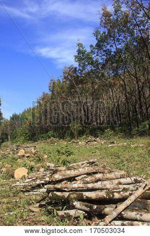 Deforestation. Logging of rain forest