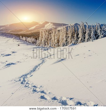Fantastic winter landscape and trampled paths at sunset that lead into the mountains. In anticipation of the holiday. Carpathian, Ukraine, Europe.
