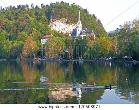 St. Martin's Church over Lake Bled with a hurry wild duck, Bled of Slovenia