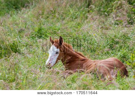 on the meadow there is a nice colt