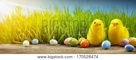 Yellow Easter chicks and Easter eggs in field