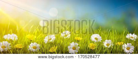 Field of wild flowers in sunlight