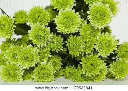 Chrysanthemum Alana, green chr bouquet, zöld krizantém csokor, krizi