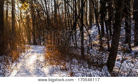 Forest path covered with snow at sunset. Trees illuminated by sunlight. Moravian landscape Pilske udoli.