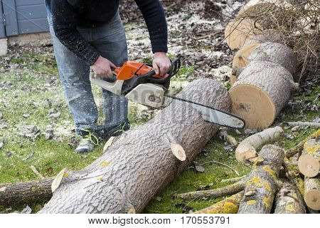 Man with chainsaw cutting the tree forest outdoor