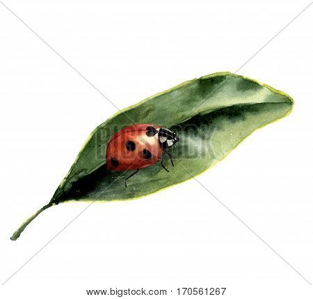 Watercolor ladybug with leaf. Nature card with ladybird. Insect illustration isolated on white background. For design or print.