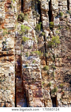 Rugged cliffs of the Kimberley region of Western Australia as background.