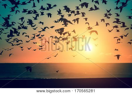 Silhouettes flock of seagulls over the sea during sunset.