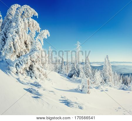 Fantastic winter landscape and tree in hoarfrost. A frosty and sunny day is in mountains. In anticipation of the holiday. Instagram toning effect. Carpathian, Ukraine, Europe.
