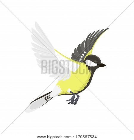 Titmouse bird isolated on white nature wild vector illustration. Wildlife yellow black feather small animal. Winter songbird great life ornithology passerine.