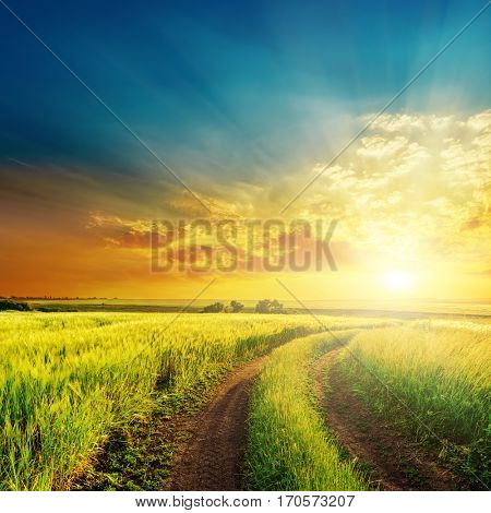 rural road in green grass and orange sunset
