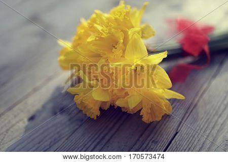 Daffodils fresh cut on wooden table