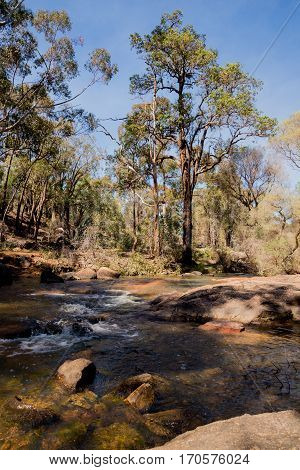 A Small Stream Flowing Through John Forrest National Park