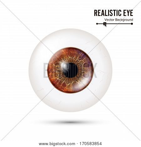 Photo Realistic Eyeball. Human Retina. Vector Illustration Of 3d Human Glossy Eye With Shadow And Reflection. Front View. Isolated On White Background