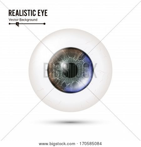 Eye Realistic. Vector Illustration Of 3d Human Glossy Photo Rrealistic Eye With Shadow And Reflection. Front View. Isolated On White Background.