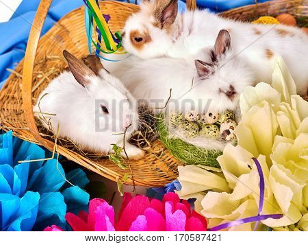 Easter bunny and egg. Cropped shot of together group rabbit among spring holiday flowers on table. Small basket and nest with quail eggs.
