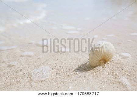nautilus paper shell  on golden beach  sand and seascape background