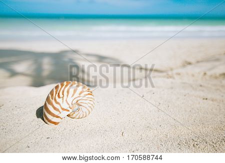 nautilus shell  on golden beach  sand and seascape background