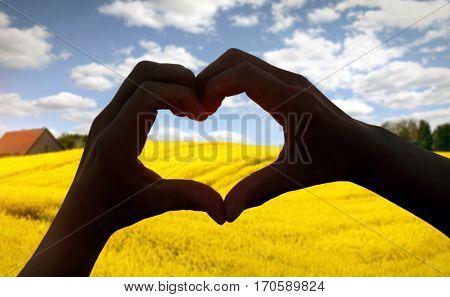 heart shape in Rapeseed