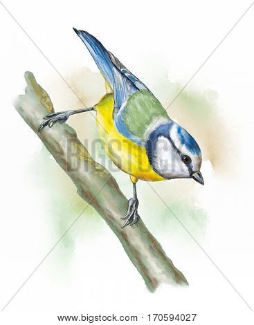 Blue tit perched on a brand. Original watercolor.