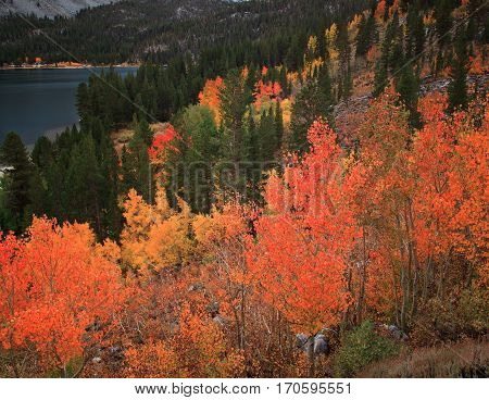 Various Fall foliage in its natural setting