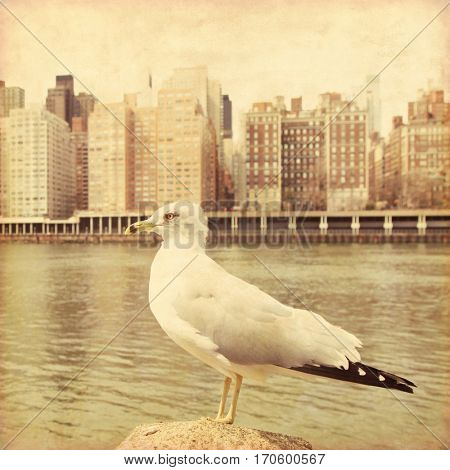 Seagull in New York City. Retro style image.