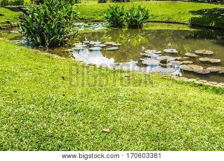 a little lotus or water lily in a pond near a meadow photo taken in Kebun Raya Bogor Indonesia java