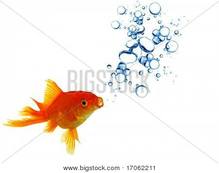 Gold fish with bubbles
