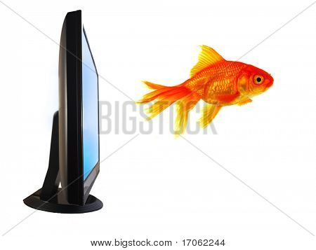 Goldfish Flying Out of Computer Monitor
