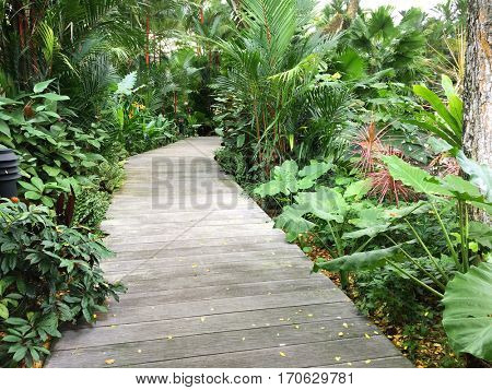 Boardwalk, wooden walkway path surrounded with green tropical plants at Singapore Botanic Gardens, Asia