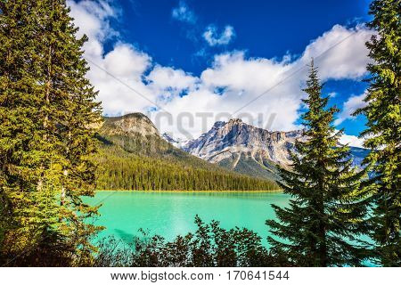 The green lake surrounded by a coniferous forest. Emerald Lake in Yoho National Park, Rocky Mountains.
