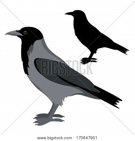 Crow vector illustration style Flat set silhouette black