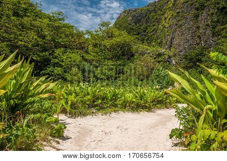 Beautiful tropical nature at  Phi Phi Ley island in Thailand