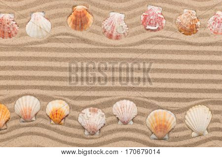Two rows of seashells lying on the sand with space for text. View from above