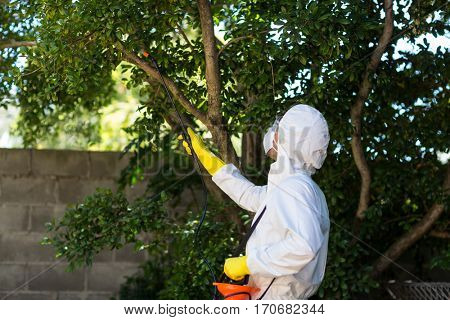 Man spraying insecticide on tree in lawn