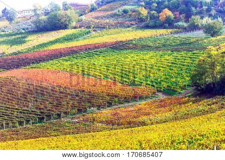 impressive vineyards in autumn colors in Tuscany - famous vine region of Italy