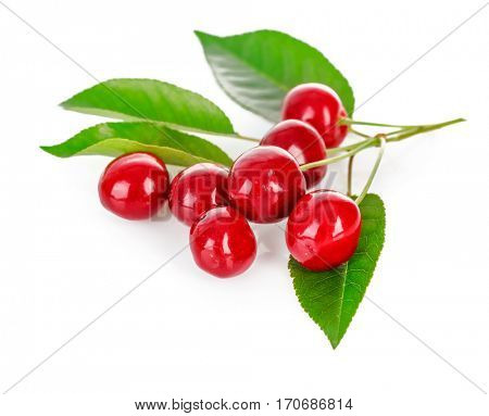 Fresh cherries with green leaves. Isolated on white background