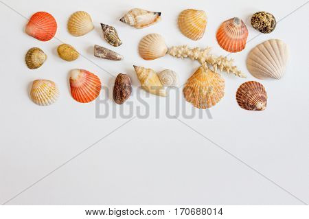 Horizontal frame with sea shells and corals on white background. Collection of sea shells on white. Sea concept.