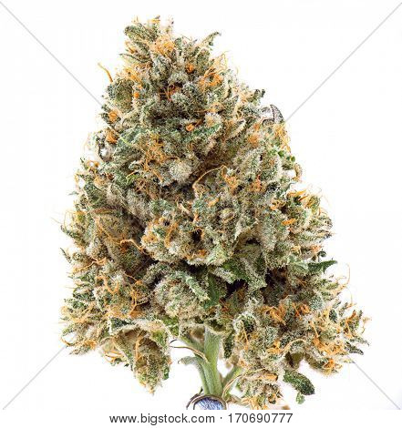 Detail of dried cannabis flower (mangolope strain) isolated over white background